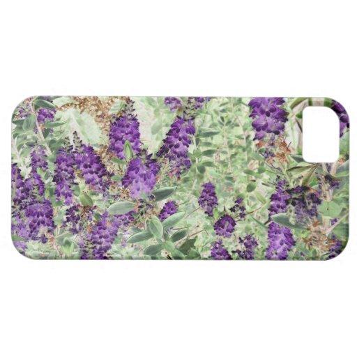 iPhone 5 case - Dwarf Hebe Lavendar