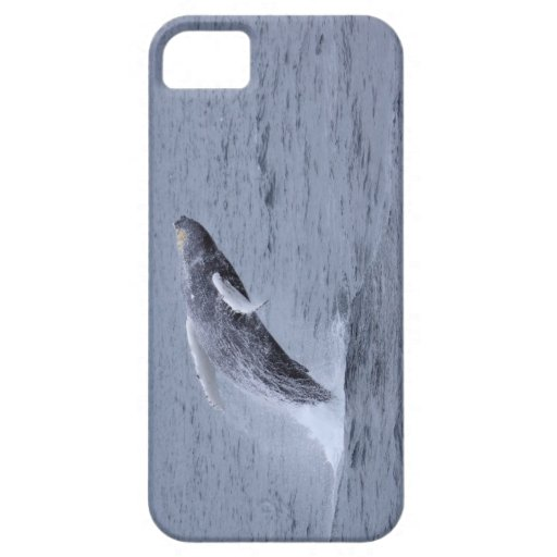 Iphone 5 Case-mate Humpback Whale breaching iPhone 5 Cover
