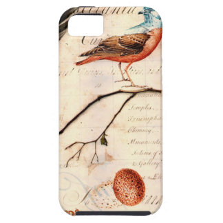 iPhone 5  Case Vintage Birdy