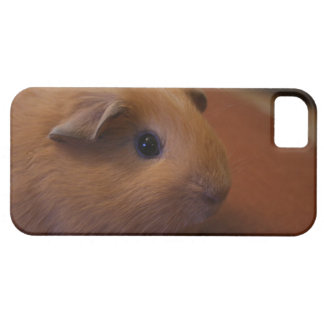 iPhone 5 case with a brown guinea pig