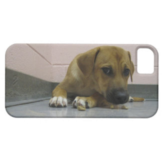 iPhone 5 case with big-eyed puppy