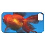 iPhone 5 case with goldfish image