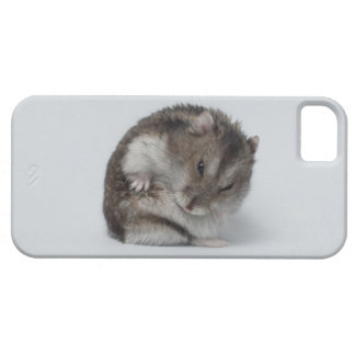 iPhone 5 case with hamster in ball