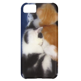 iPhone 5 case with napping kittens