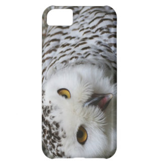 iPhone 5 case with owl picture