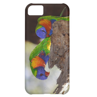 iPhone 5 case with parakeets
