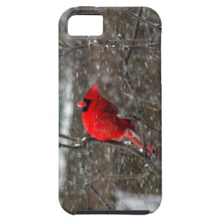 iPhone 5 case with photo of male cardinal