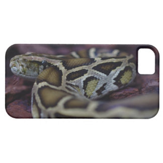 iPhone 5 case with picture of snake on ground