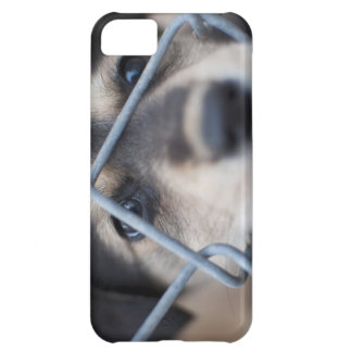 iPhone 5 case with puppy who needs rescue