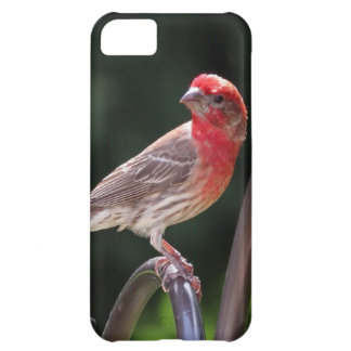 iPhone 5 case with red head finch