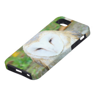iPhone 5 cases Personalized White Owl Wildlife