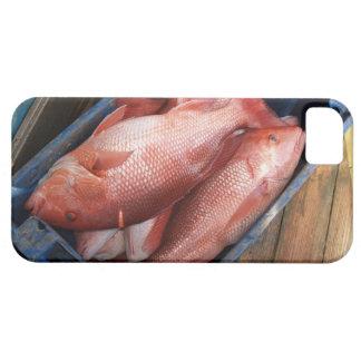 iPhone 5 de los pescados del pargo rojo Funda Para iPhone SE/5/5s