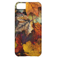iPhone 5 - Fall Foliage iPhone 5C Covers