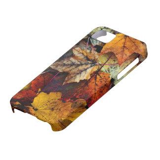 iPhone 5 - Follaje de otoño Funda Para iPhone SE/5/5s