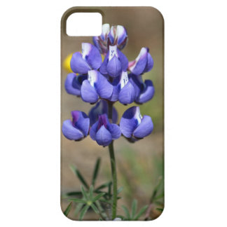 iphone 5, Lupin Case