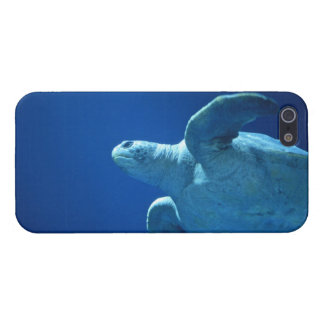 iphone 5, Sea Turtle Glossy Case