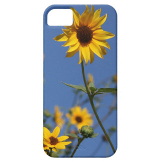 iphone 5, Sunflower Case