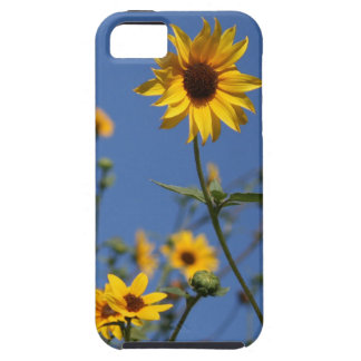 iphone 5, Sunflower Case-Mate Tough Case