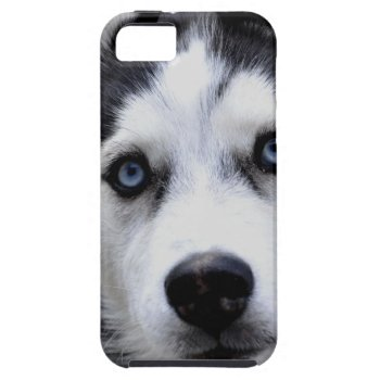 iphone 5 vibe QPC template iPhone 5 C - Customized iPhone SE/5/5s Case