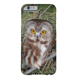 iPhone 6 Case - Northern Saw-whet Owl