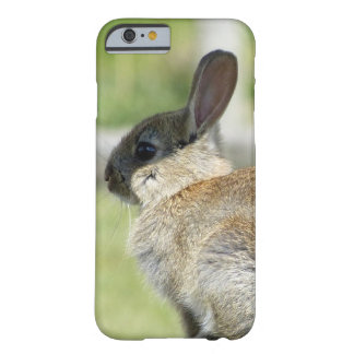 iPhone 6 case with rabbit in profile