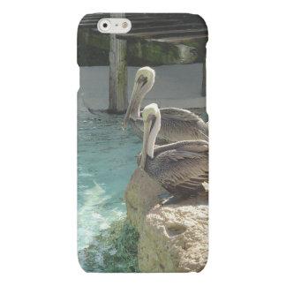 iPhone 6 - Pelícanos Chillin