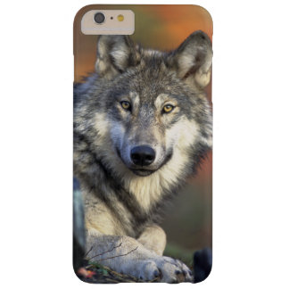 iPhone 6 revestimiento protector - lobo Funda Para iPhone 6 Plus Barely There