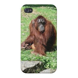 iPhone cabelludo rojo marrón 4 del orangután iPhone 4 Cárcasas