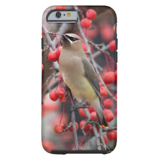 iPhone Case 6/6s Waxwing