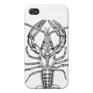 iPhone Case / American Lobster