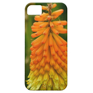 iPhone Case-Red Hot Poker Floral iPhone SE/5/5s Case