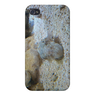 iPhone case with cuttlefish photo