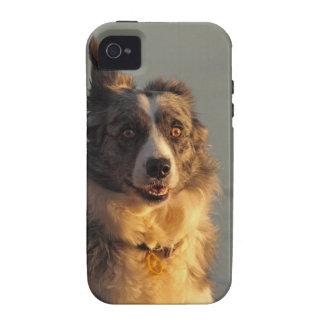 iPhone corriente 4 4S del perro del border collie iPhone 4 Carcasas
