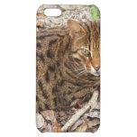 iPhone de la caja de la mota del gato de Bengala y