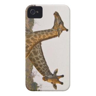 iphone del caso de la jirafa iphone4 del masai de iPhone 4 Case-Mate cárcasa