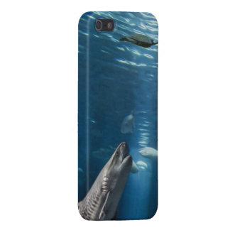 Iphone del cebo del tiburón 5 representaciones vis iPhone 5 fundas