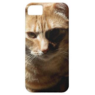 iPhone del gato de Bengala del jjhelene/caso del Funda Para iPhone SE/5/5s