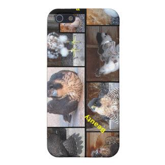 iPhone duro 2012 del caso de Shell de los Falcons  iPhone 5 Cárcasas