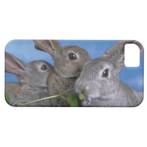 iPhone lindo 5 conejos hermosos del bebé de los ca iPhone 5 Case-Mate Coberturas