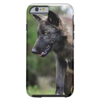 iPhone negro 6 del lobo Funda De iPhone 6 Tough