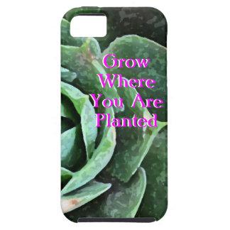 Iphone personalizado Succulent color de rosa 5 iPhone 5 Carcasas