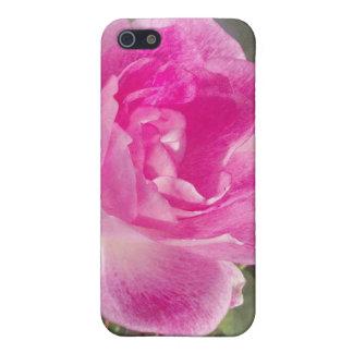 iPhone subió jardín rosado ornamental 4 iPhone 5 Protector