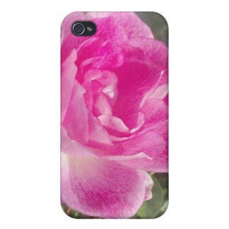 iPhone subió jardín rosado ornamental 4 iPhone 4 Cárcasas