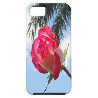 iPhone tropical 5 casos subiós y palmera iPhone 5 Protector