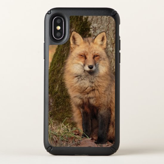 iPhone X Case: Sitting Fox Speck iPhone X Case