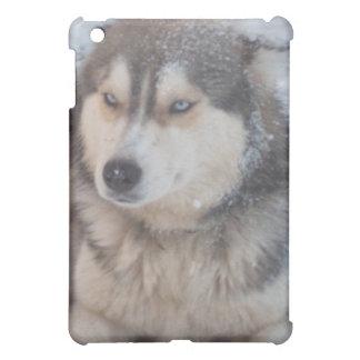 Ipod Case with Husky iPad Mini Cases
