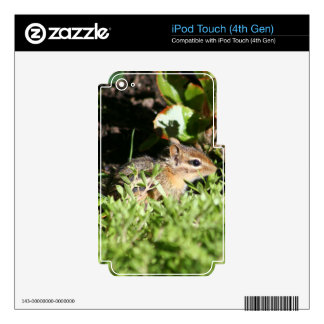 ipod Touch 4 skin with photo of cute chipmunk iPod Touch 4G Decals