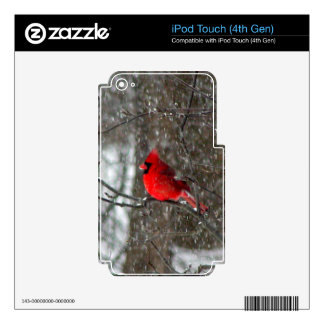 ipod touch 4 skin with photo of male cardinal skins for iPod touch 4G