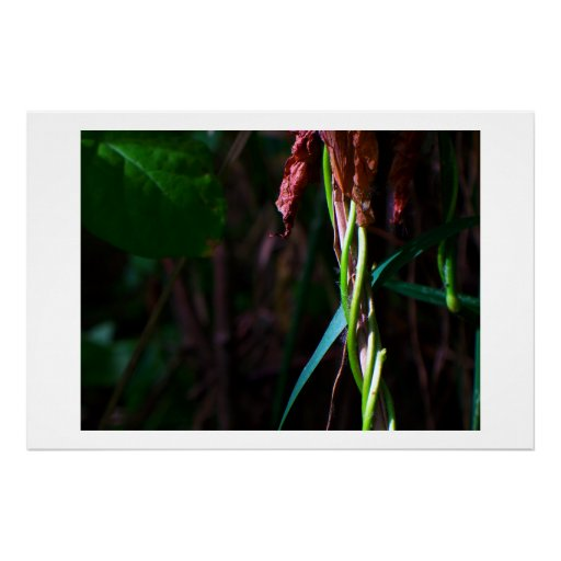 Ipomoea on Grass, Archival paper Poster