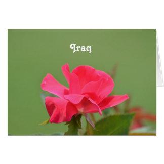 Iraqi Rose Greeting Card